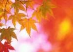 勉強の秋より寂しさの秋?